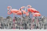 Nhiếp ảnh gia về Chim của Năm