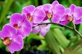 Bài học quý giá từ một vị thầy tu già trồng hoa lan