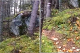 """Kỳ lạ: Mặt đất trong rừng Canada như đang """"thở gấp"""""""