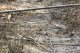 nước nhiễm dầu thải, nước sông Đà