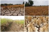 Bộ TN-MT báo cáo khẩn về tình trạng xâm nhập mặn, hạn hán