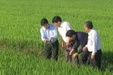 Bộ Nông nghiệp tăng cường bảo vệ 1,1 triệu ha lúa đông xuân