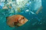 Rốt cuộc thì có bao nhiêu gram nhựa trong hải sản chúng ta ăn?