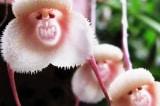 """""""Vua Khỉ"""" trong thế giới thực vật"""